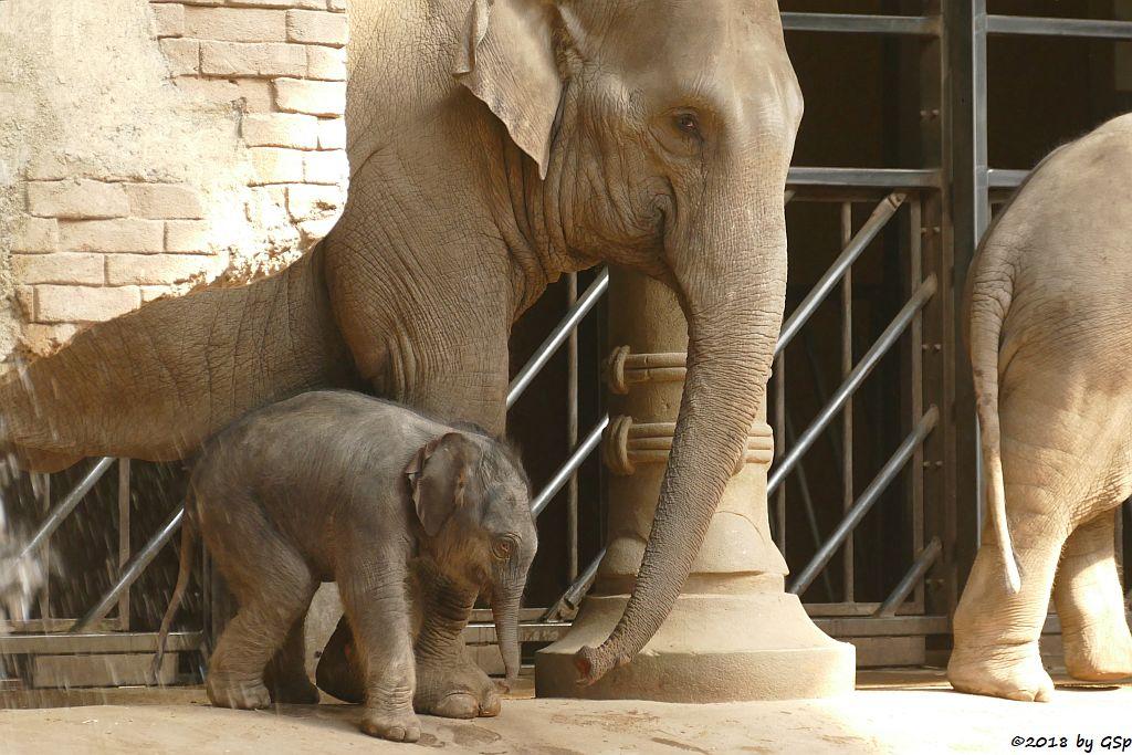 SHILA mit ihrem Sohn, geb. 5.5.18 (6 Tg.)