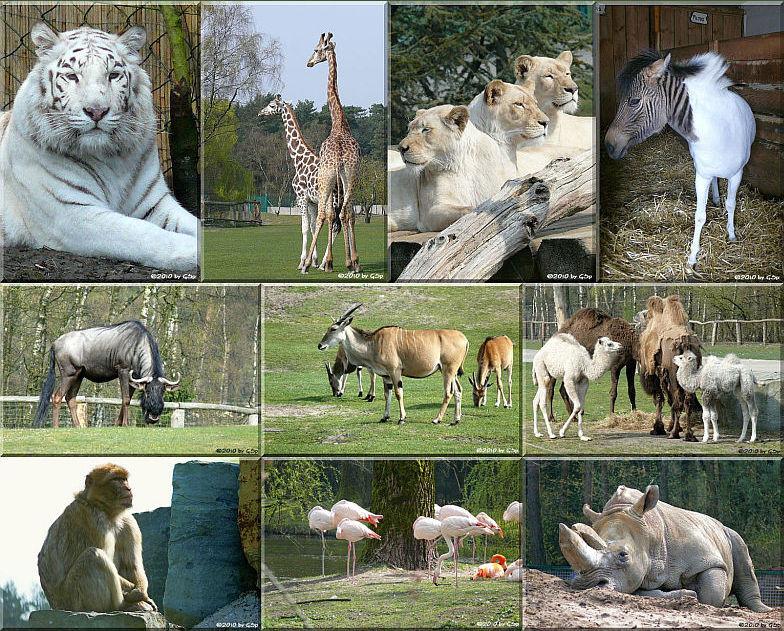Safaripark Stukenbrock - 140 Fotos
