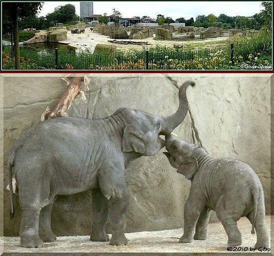 Elefantenpark 11.02.10 - 29 Fotos