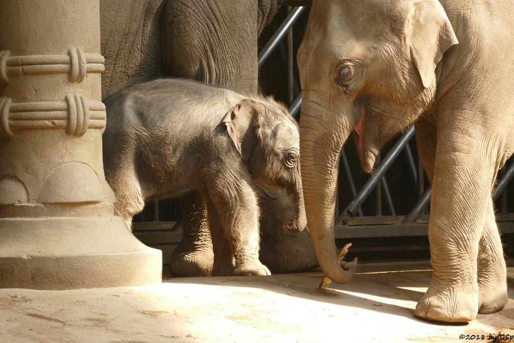 SHILA mit ihrem Sohn, geb. 5.5.18 (6 Tg.), ANJULI