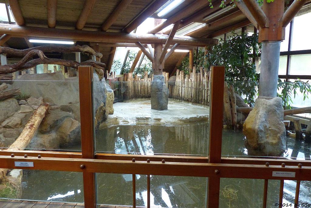 Flusspferd-Innenbereich