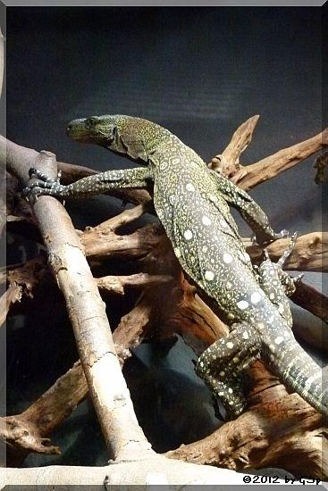 Papuawaran