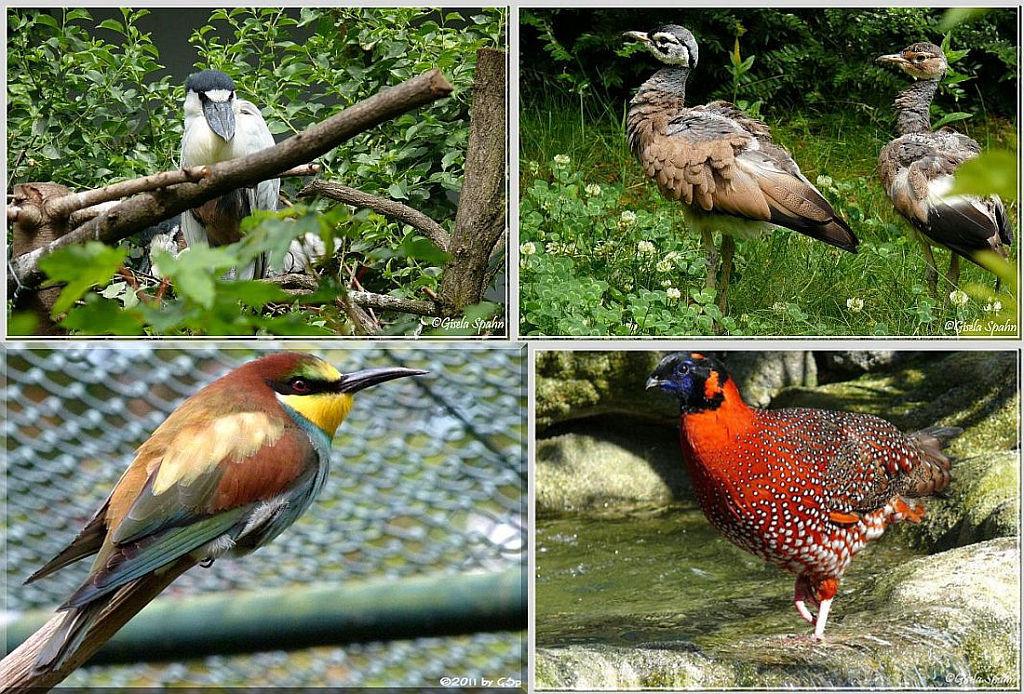 Vogelbüsche - 37 Fotos