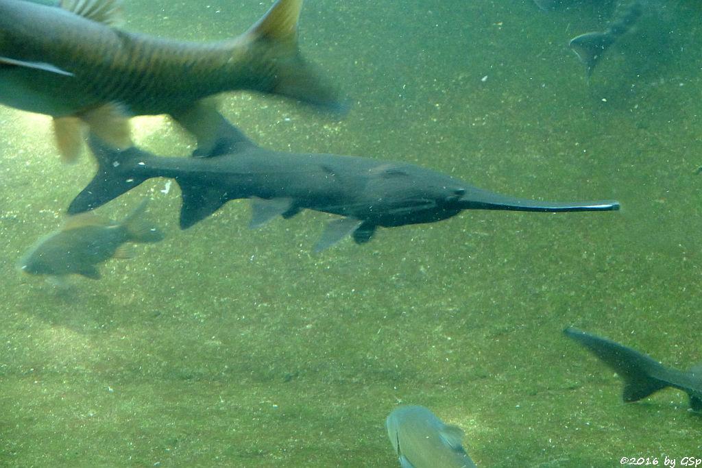 Heimische Fischarten