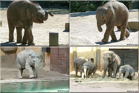 Elefanten 2010 - 80 Fotos