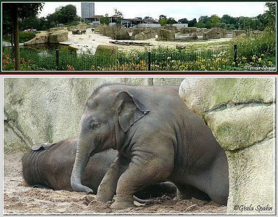 Elefantenpark 29.02.08 - 84 Fotos