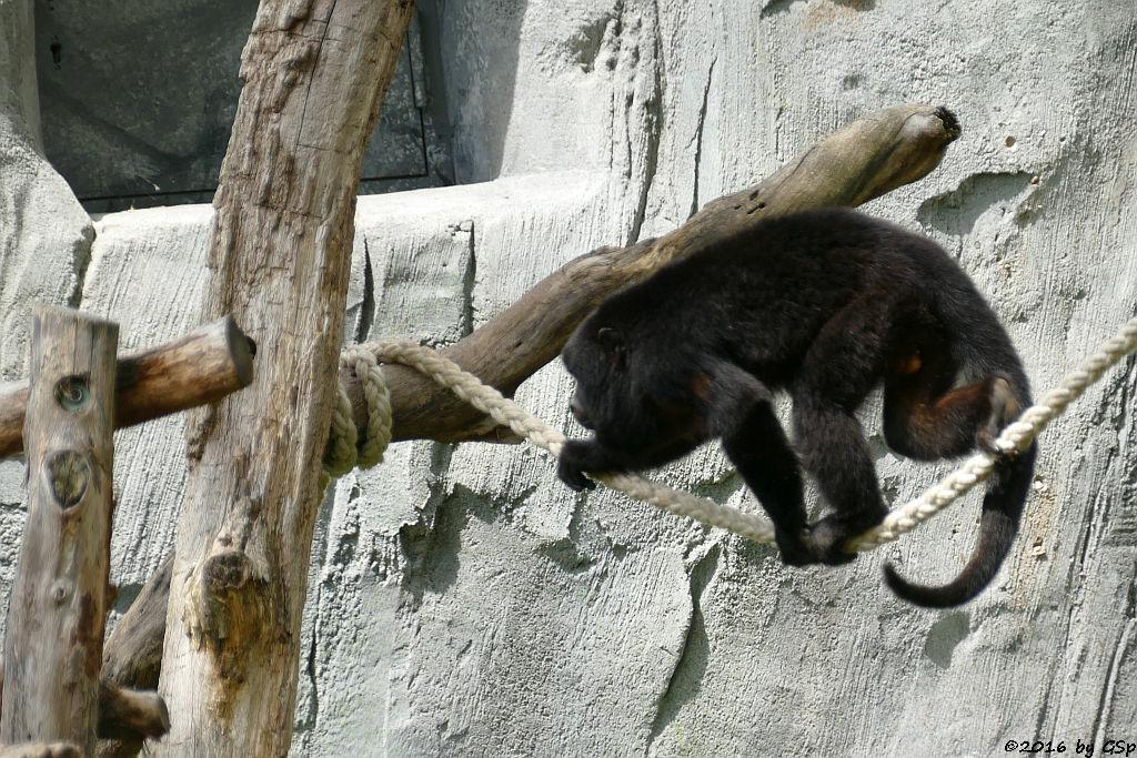 Schwarzer Brüllaffe