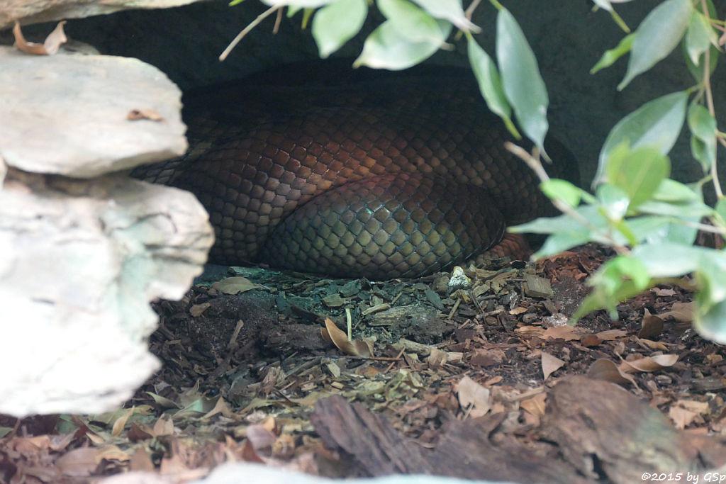 Amethyst-Python