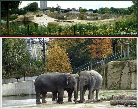 Elefantenpark 15.11.06 - 32 Fotos