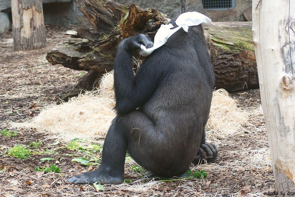 Flachlandgorilla QUEMBO
