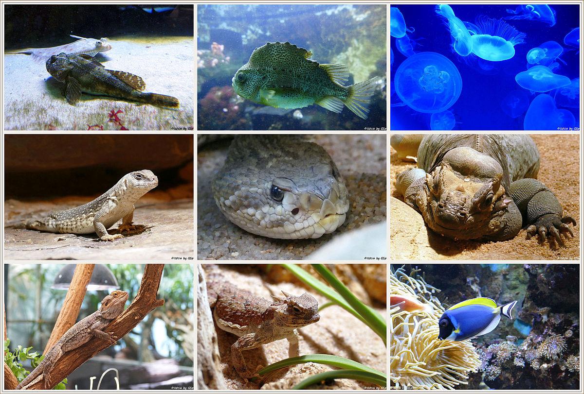 Aquarium-Terrarium - Fotos auf Unterseite