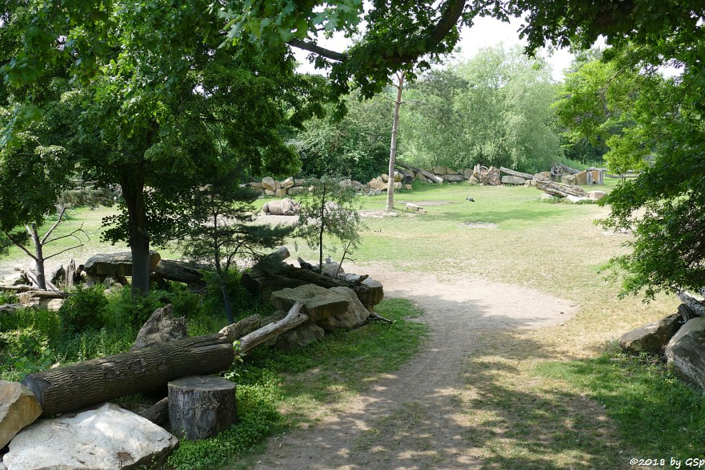 Spitzmaulnashorn (Spitzlippennashorn, Doppelnashorn) NANDI