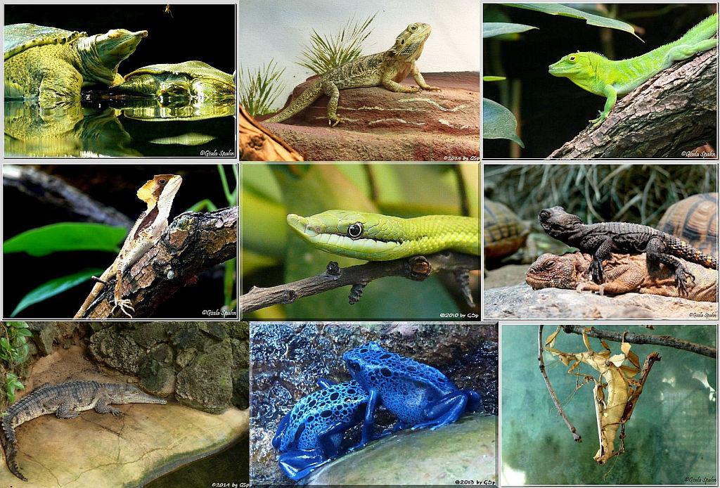 Exotarium Reptilienhalle - 236 Fotos