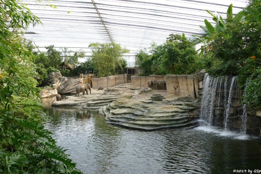 Elefantental innen