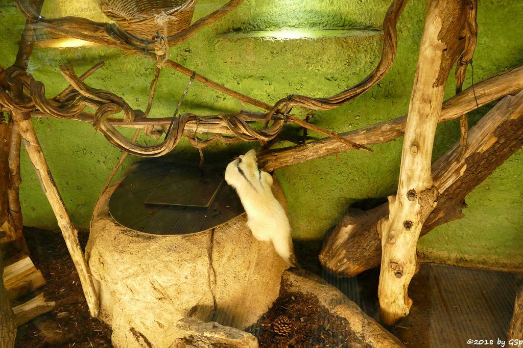 Südlicher Tamandua (Südlicher Mittlerer Ameisenbär)