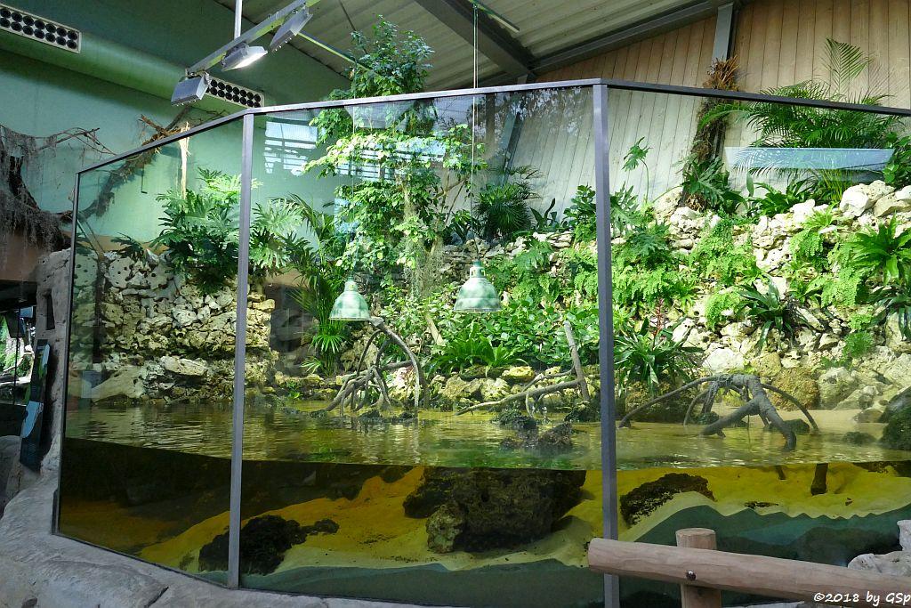 Mangroven-Anlage