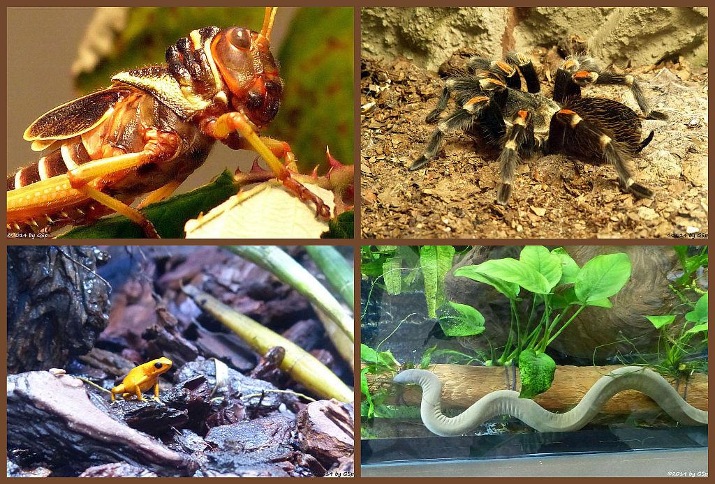 Insektarium - 41 Fotos