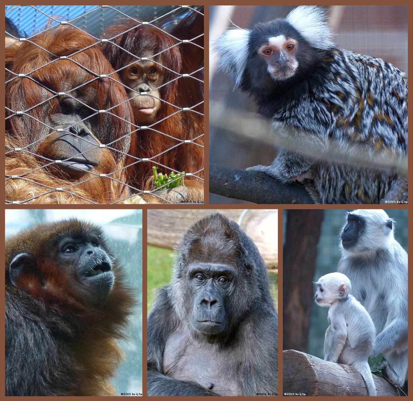 """Affenhaus - Fotos auf Unterseite """"Affenhaus"""""""