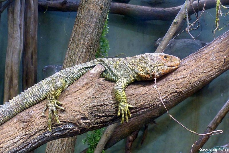 Krokodilteju