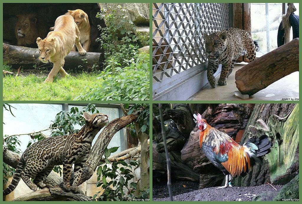 Dschungelzelt - 41 Fotos