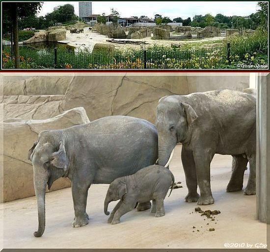 Elefantenpark 10.04.10 - 21 Fotos