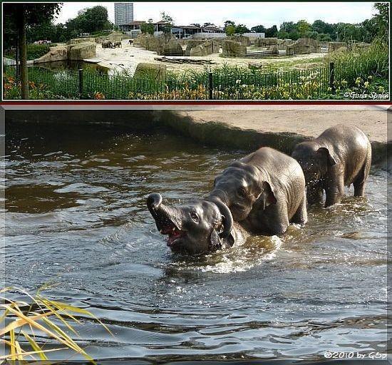 Elefantenpark 26.11.10 - 140 Fotos