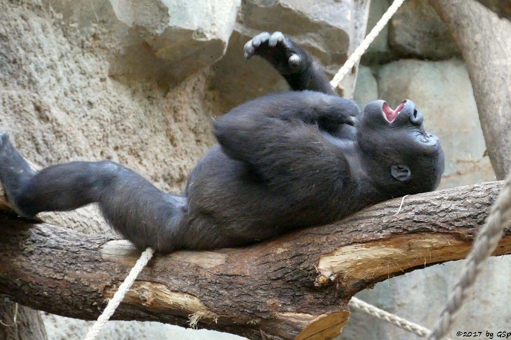 Flachlandgorilla SAWA
