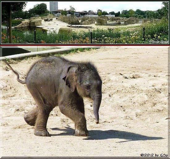 Elefantenpark 08.08.12 - 90 Fotos