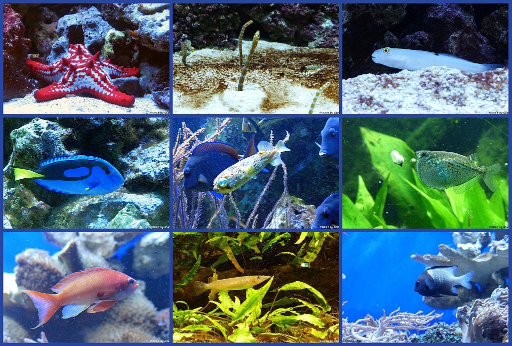 Aquarium - 205 Fotos