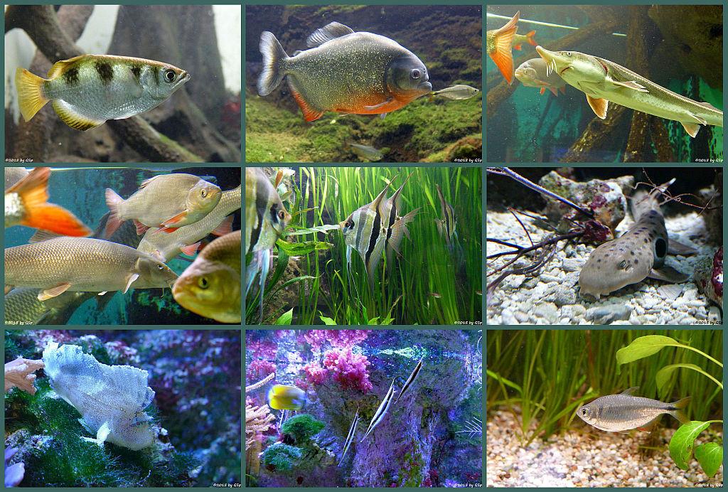 Exotarium - Aquarienhalle Teil 2 - 148 Fotos