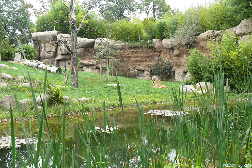 Löwensavanne Makasi Simba