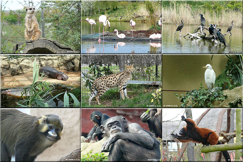 Afrika Teil 2 - 128 Fotos