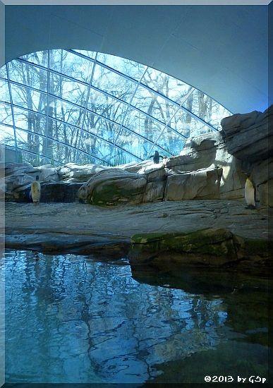 Königsponguin und Felsenpinguin