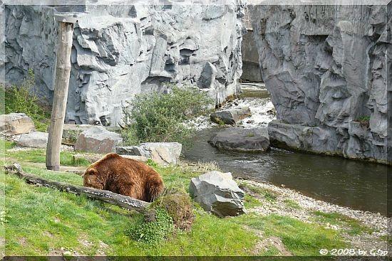 Kodiakbär in der 3000m² Alaska-Berglandschaft