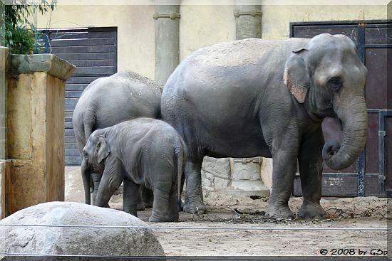 Kandy, Shila (hier 19 Monate alt), Yashoda