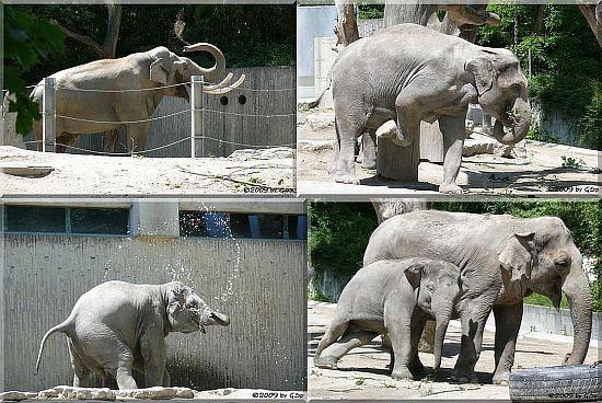 Elefanten - 31 Fotos