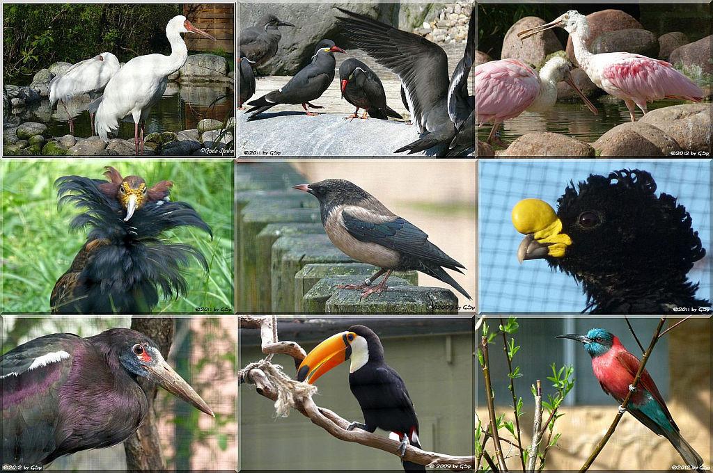Vogelvolieren - 152 Fotos
