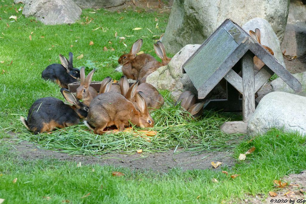 Hasenkaninchen