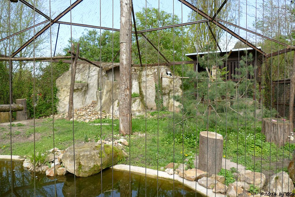 Riesenseeadler