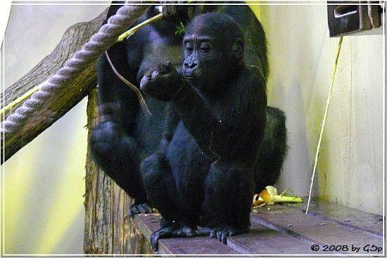 BANJOKO (knapp 2 Jahre alt)