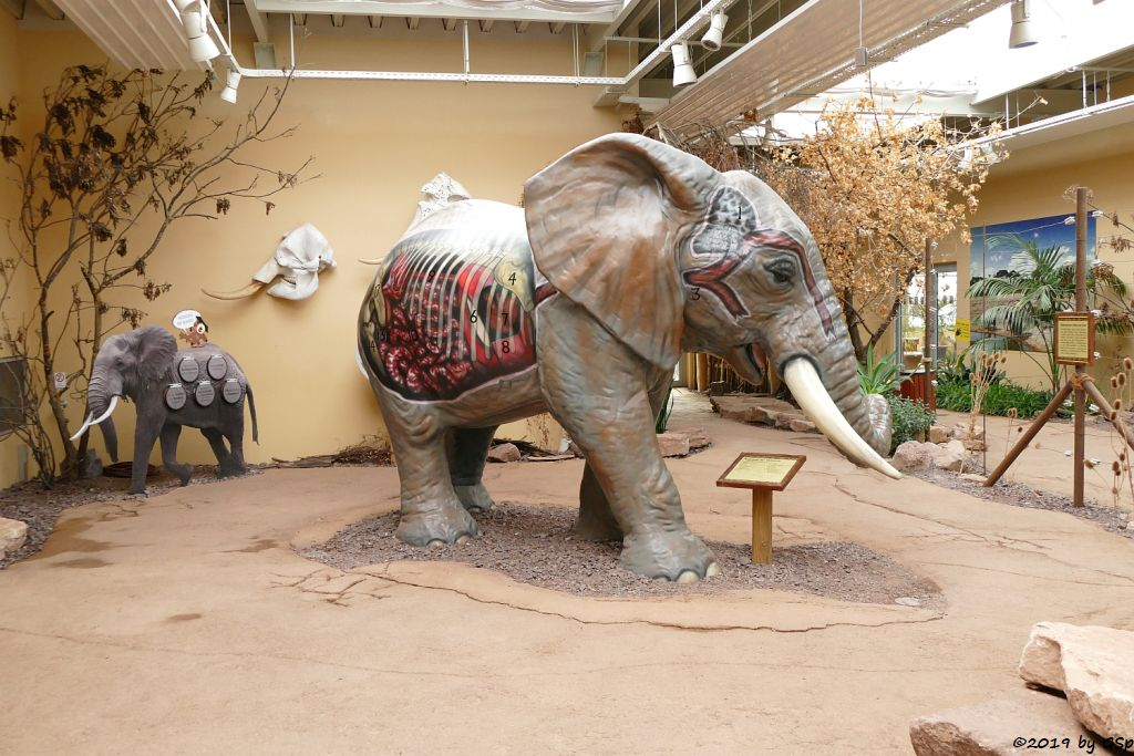 Erlebniswelt im Elefantenhaus