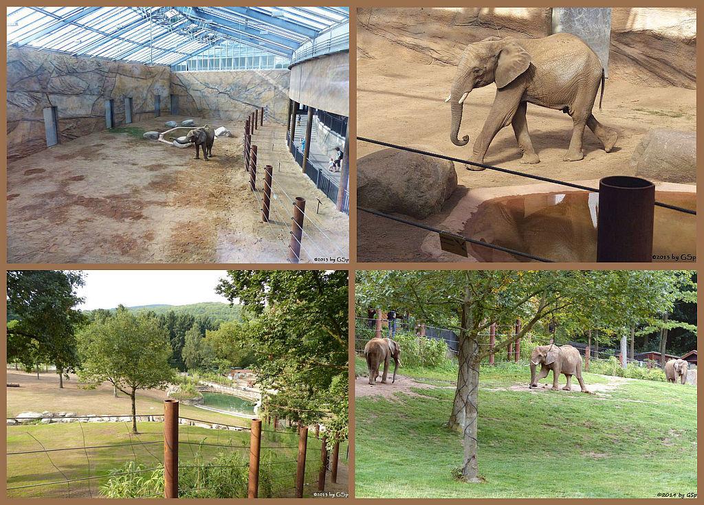 Elefanten in der Zeit der Eingewöhnung - 137 Fotos
