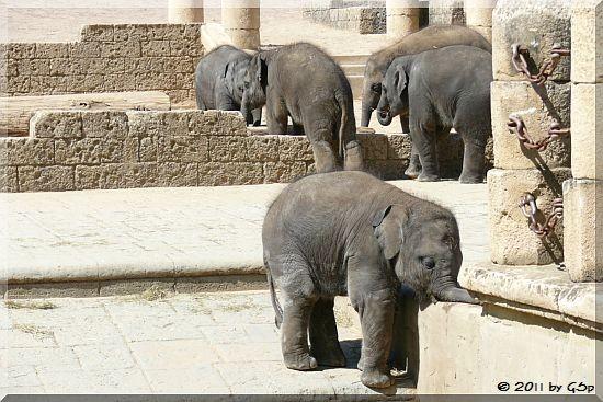 Elefantenkinder 3.5.11 - 160 Fotos