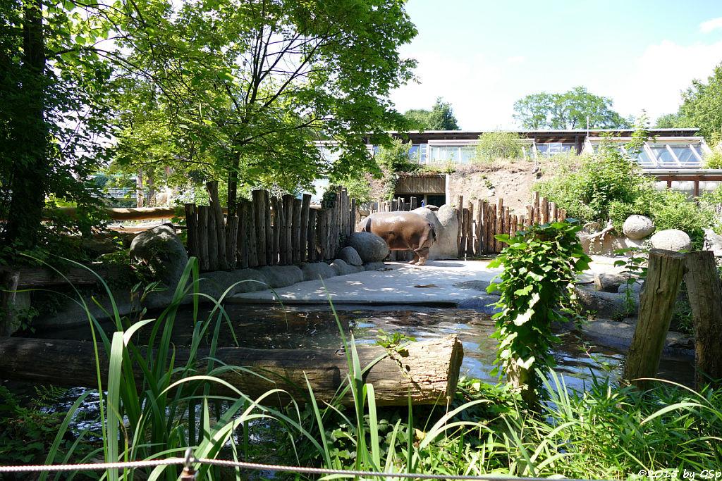 Flusspferd PLATSCH