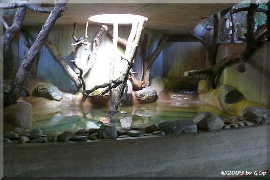 Badebecken im Nashorn-Innengehege