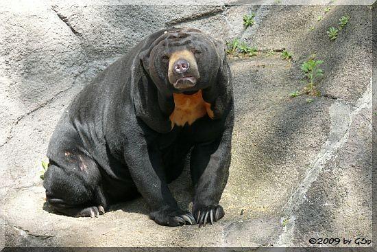 Malaienbär TEDDY