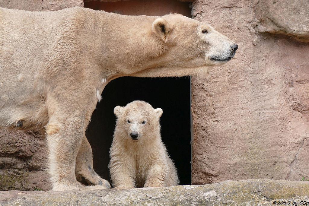Eisbärin VERA mit ihrer Tochter CHARLOTTE - 184 Fotos