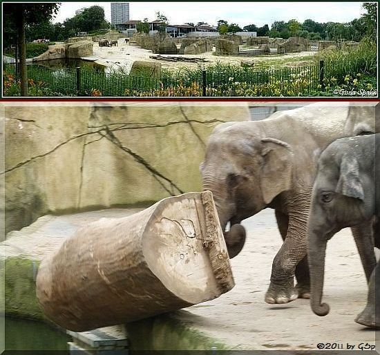 Elefantenpark 14.12.11 - 75 Fotos