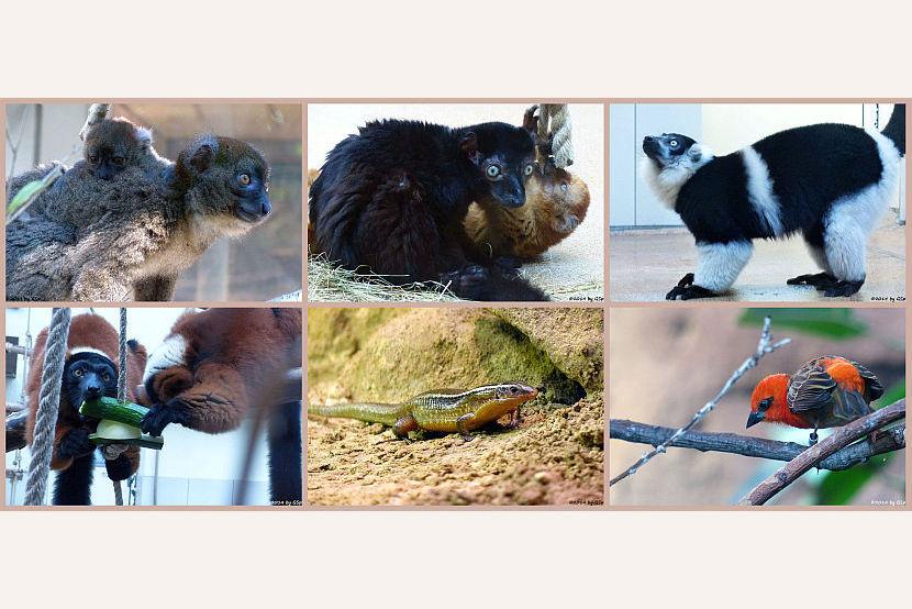 Madagaskarhaus - 184 Fotos
