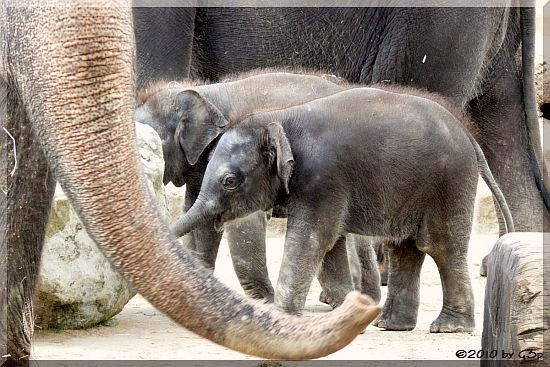 Elefantenkinder 21.09.10 links NUKA, rechts DINKAR - 80 Fotos